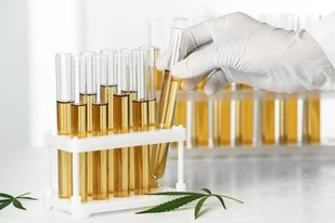Medical Cannabis Extraction